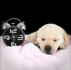 Sleepy Puppy by Analog Clock
